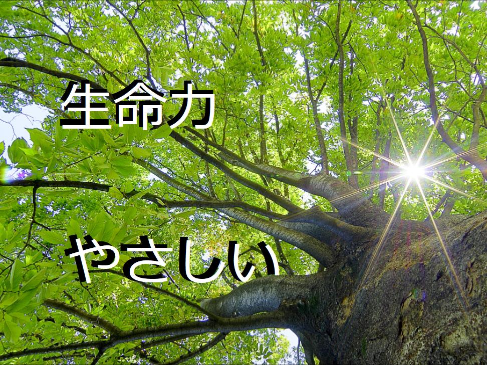 フリーBGM無料音楽素材 【力強い、生命力、さわやか、壮大、やさしい、新緑】 「BGM7」